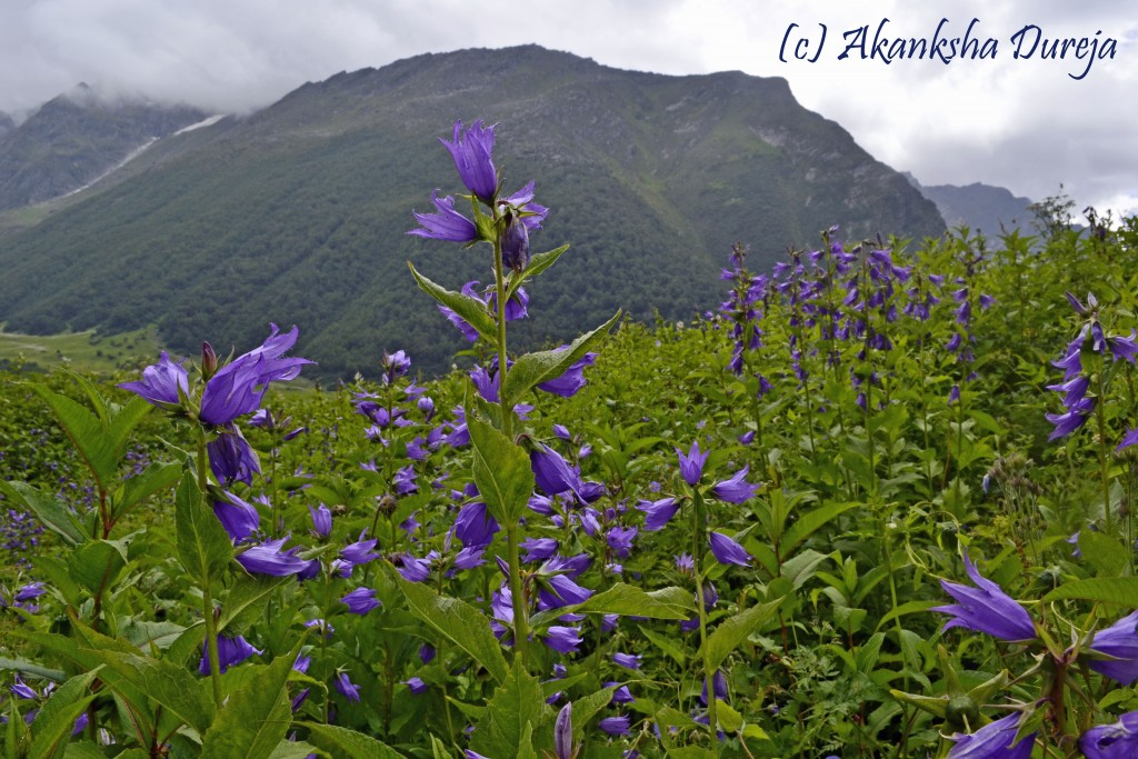 valley of flowers - streettrotter