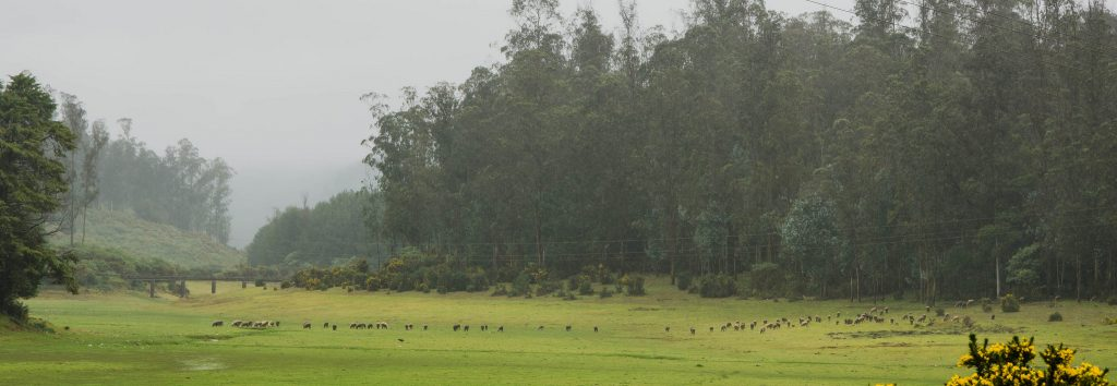 Lush green landscapes in Ooty - streettrotter
