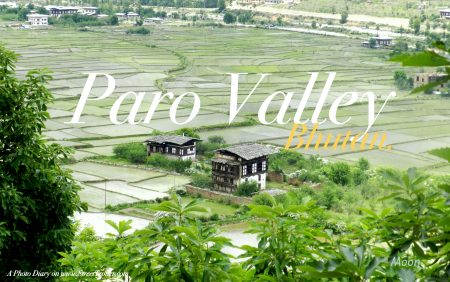 5 rice fields-001