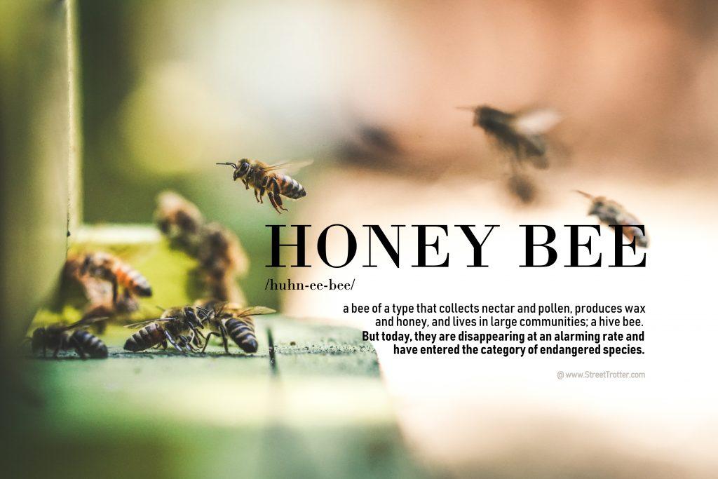 honey - bees - streetrotter